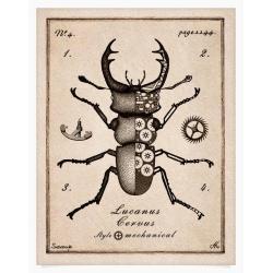 żuk,owad,rycina,rysunek,kolaz,chrząszcz - Ilustracje, rysunki, fotografia - Wyposażenie wnętrz