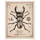 Ilustracje, rysunki, fotografia żuk,owad,rycina,rysunek,kolaz,chrząszcz
